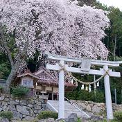 桜(サクラ)行波のしだれ桜