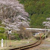 桜(サクラ)河山