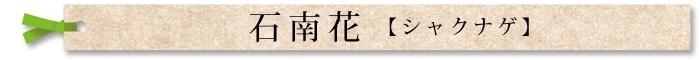 石南花(シャクナゲ)